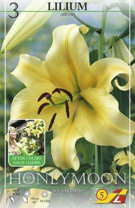 "Blumenzwiebeln Baum-Lilie ""Honeymoon"" - 3 Stück"