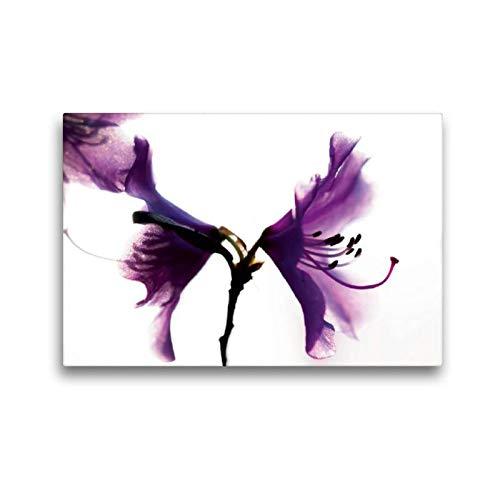 Calvendo Premium Textil-Leinwand 45 cm x 30 cm quer, Rhododendron 'Praecox' | Wandbild, Bild auf Keilrahmen, Fertigbild auf echter Leinwand, Leinwanddruck Natur Natur
