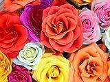 Indian Gardening Mixed Double Camellia Impatiens Balsamina Flower Seeds 10 Seeds