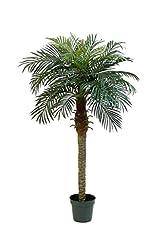 Idea Regalo - Set 2 x di Palma da dattero Artificiale, 21 Fronde, 150 cm - 2 Pezzi di Palma Decorativa/Palmizio - artplants