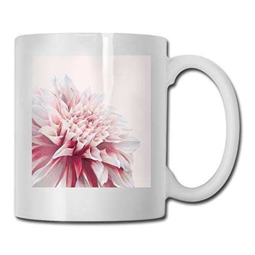Jolly2T Funny Ceramic Novelty Coffee Mug 11oz,Close Up Dahlia Blossom with Red and White Petals One Single Large Flower,Unisex Who Tea Mugs Coffee Cups,Suitable for Office and Home Blossom Demitasse Cup