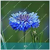 ASTONISH Sgomento SEMI: 2: ZLKING 100 pc/pacchetto semi variopinti Fiordaliso Bonsai alta varietà di fiori semi di piante hanno un profumo per balcone 2
