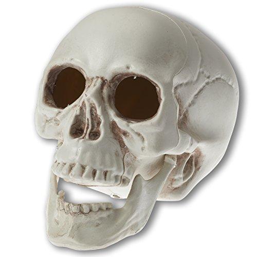 Prextex 16.5cm realistisch aussehender Skelett Schädel für die beste Dekoration zu Halloween (Für Halloween Kunststoff-knochen)