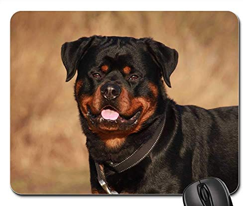spad, Rottweiler Animal Winter Dog Nature Outdoor ()