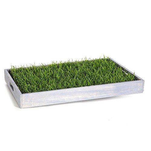 Miau Katzengras inklusive Dekotablett 'Sky Blue' | 60x40cm echtes, saftiges Gras | sofort nutzbar - kein aussäen |(Sky Blue)