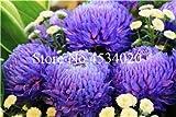 AGROBITS 100 piezas del crisantemo planta de Bonsai Bonsai flor del aster Flor Seedsplants crisantemo del arco iris perenne de flores a domicilio jardín: 20