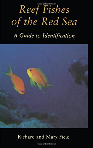 Reef Fish Of The Red Sea: A Guide to Identification