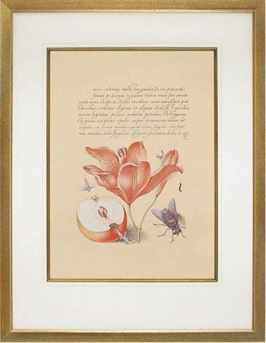 Hoefnagel 6, Orangefarbene Lilie