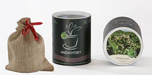 Seedeo Anzucht-Geschenkset Virginischer Tabak (Nicotiana tabacum)