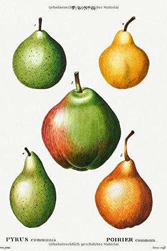 """Designer Notizheft: liniert mit Motiv """"Birne (Pyrus communis)"""" von Pierre-Joseph Redouté, Notebook, Schreibheft etwa A5 (15,3 x 22,9 cm) mit ... stilvolle Geschenkidee für Gartenliebhaber"""
