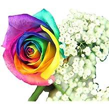 Suchergebnis Auf Amazon De Fur Blumengrusse Geburtstag