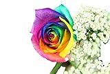 Regenbogen Rose Deluxe - inklusive gratis Kultvase - z.B. als Highlight zum Geburtstag