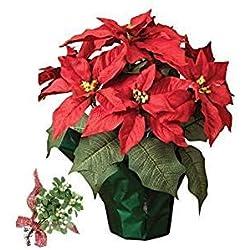 Poinsettia o flor de Pascua, planta de navidad + muérdago natural, antigua tradición portadora de la buena suerte. Añade tu dedicatoria