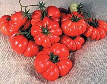 FERRY Keim Seeds: 25 Samen von Costoluto Genovese Das hässliche Tomate -