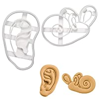 Set of 2 Ear Cookie Cutters (Designs: Anatomical Human Ear and Cochlea Inner Ear), 2 Pieces - Bakerlogy