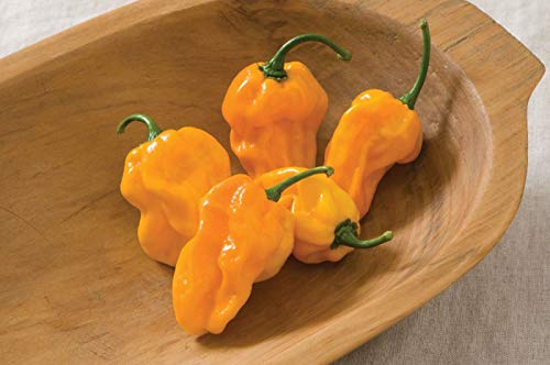 PLAT FIRM GERMINATIONSAMEN: 50 Samen: USA F1 Hybrid Numex Suave Orange Habanero Pepper 25-200 Samen