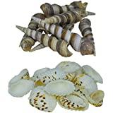 Zevora Sea Shells For Home Decor, Aquarium, Pack Of 2 (600 Gms) (Shells Combo Of 2 Small Mix Color & Big Sankh Shells)