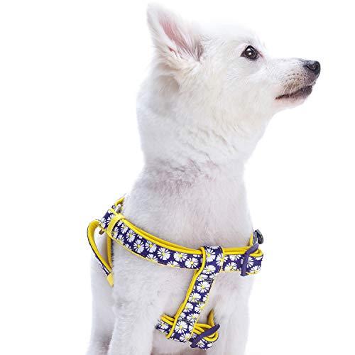 Blueberry Pet Step-In 42-54cm Brust Gänseblümchendruck Ultimatives Zugentlastendes Gepolstertes Hundegeschirr, Ultra-Soft Neopren Klein, Passender Hundehalsband erhältlich Separate