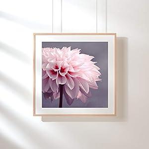Fotografie Print Kunstdruck 12x12cm Dahlie quadratisch rosa Blüte Flower