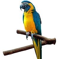 chiccharming Pet Parrot Raw Holz Ständer Rack Spielzeug Sitzstange Käfig Zubehör