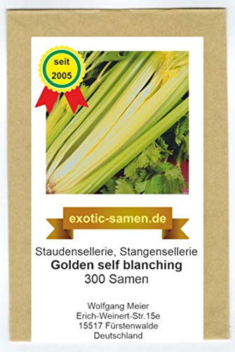 Stangensellerie - Staudensellerie - golden self blanching - 300 Samen