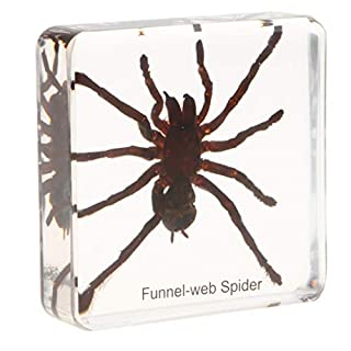 D DOLITY Tarantulas Spider Specimen Insect Paperweight Taxidermy, Kids Science Nature Educational Toy Gift Ornament