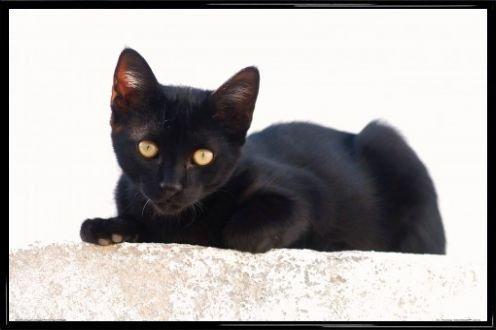 1art1 Katzen Poster und Kunststoff-Rahmen - Schwarzes Kätzchen (91 x 61cm)
