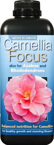 fertilizzante-liquido-concentrato-bilanciato-camellia-focus-1-litro