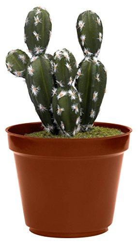 Thumbs Up cacsafe Caja Fuerte en Forma de Cactus, plástico, Multicolor, 11,5x...