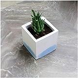 Paradox Rectangle Light Blue Cement Planter/Vase / Flower Pot/Home and Garden Decor