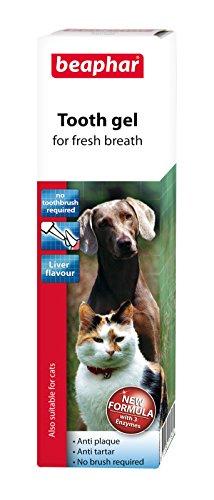 katzeninfo24.de Beaphar Zahngel für Hunde und Katzen, Geschmacksrichtung: Leber, gegen Zahnbelag