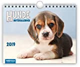 Notizkalender Hunde 2019 Wandkalender Postkartenformat: mit Spiralbindung