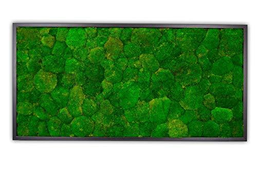 Moosbild Wandbild mit Kugelmoos, Pflanzenbild, versch. Maße günstig