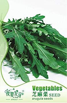 vistaric 100 semi/pack semi di rosmarino pianta da giardino fai da te facile da coltivare erba, semi di ortaggi sani