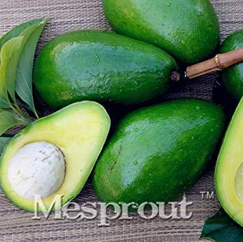 Visa Store Neue seltene grüne Avocado 10 + Samen