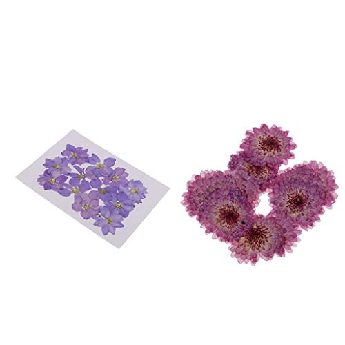 chiwanji Pack of 22Pcs Beautiful Natural Pressed Dried Flowers Pressed Leaves for Scrapbooking Art Craft Epoxy Resin Pendant Jewelry