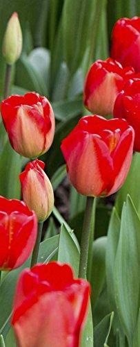 Banner - Thema: Frühling / Sommer - Rote Tulpen - 180cmx75cm - zum Hängen & Dekorieren