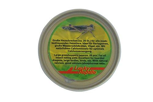 Lucky Reptile HDC-21 Herp Diner Grasshoppers, Medium 2