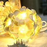 Gaddrt Vintage Fleur de Frangipanier Guirlande Lumineuse Batterie Maison Fête de Mariage avec 10LED Boule de lumière