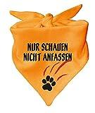 KLEINER FRATZ Hunde Dreiecks Halstuch (Fb: gelb) (Gr. 2 (68 cm)) Nur schauen Nicht anfassen