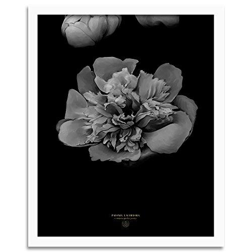 Feeby. Tableau encadré, Tableau Déco, Tableau Mural, Décoration Murale Image Imprimée, 1 Partie - 40x60 cm, Dmitry Belov - Fleur Nature Noir Blanc