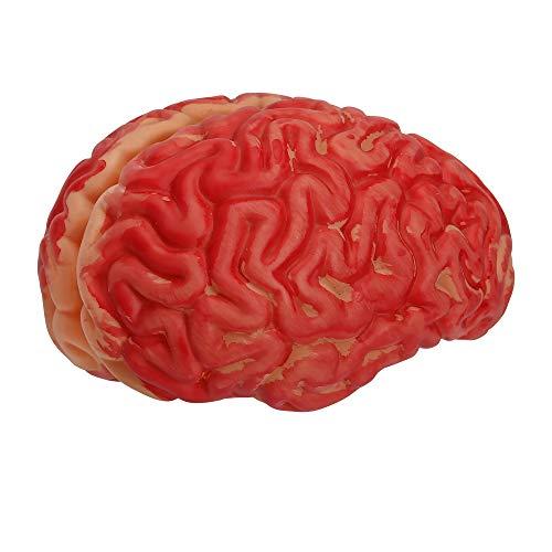 es Gehirn, Unisex- Erwachsene, Rot ()