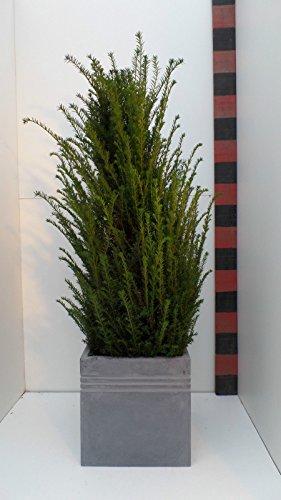 '45 cm H : Bac à fleurs « leichtgewicht Bac à fleurs Cache-pot fibres Tone, gris