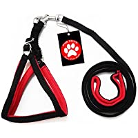 Pawzone Puppy& Kitten Blue Body Harness with Leash - 1/2 Inch