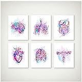 kingxqq Anatomie Print Anatomische Organe Poster Gehirn Herz Lunge Leber Becken Brustkorb Menschliche Anatomie Kunst Malerei Klinik Wandkunst Decor-30x40x6Pcscm Kein Rahmen