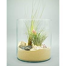 Concretelab&co Kit de terrario para Plantas de Aire 2 Plantas de Aire, Conchas de mar