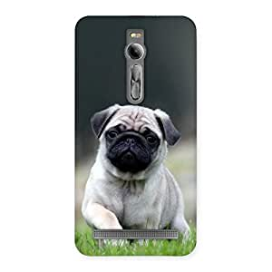 Cute Pug Dog Grass Multicolor Back Case Cover for Asus Zenfone 2