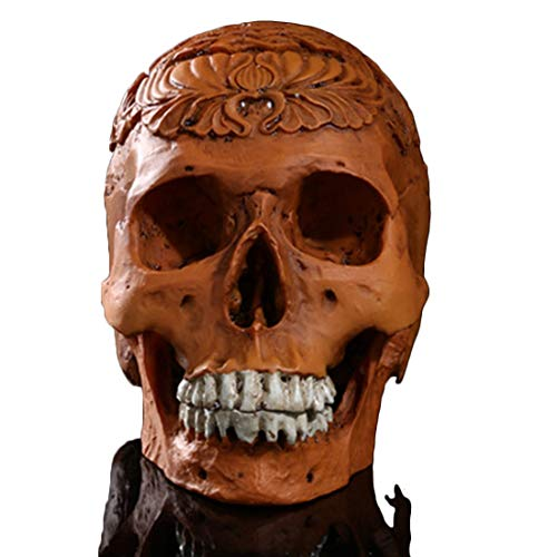 Yammucha Abnehmbare Schädel Kopf Knochen Modell Halloween Dekoration beinhaltet vollständige Reihe von Zähnen Party Supplies (Color : Brown)