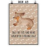 Mr. & Mrs. Panda Poster DIN A3 Hund Dackel fröhlich - Hund, Hunde, Haustiere, Hunderasse, Tierliebhaber Poster, Wandposter, Bild, Wanddeko, Geschenk