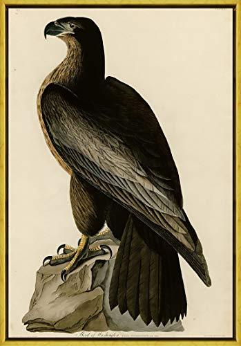 Berkin Arts Rahmen John James Audubon Giclée Leinwand Prints Gemälde Poster Wohnkultur Reproduktion(Vogel von Washington) #XLK